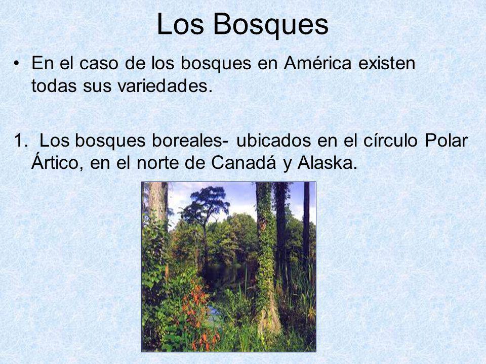 Los Bosques En el caso de los bosques en América existen todas sus variedades.