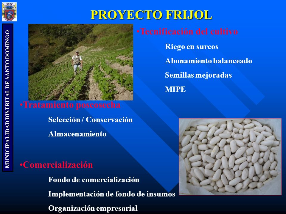 PROYECTO FRIJOL Tecnificación del cultivo Tratamiento poscosecha