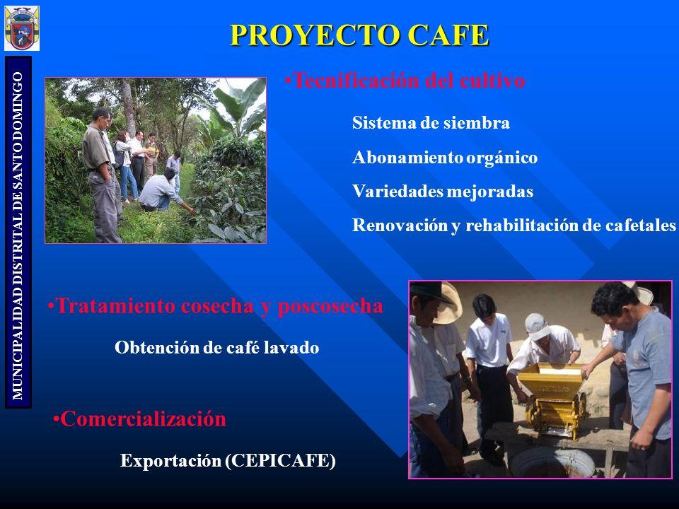 PROYECTO CAFE Tecnificación del cultivo Sistema de siembra