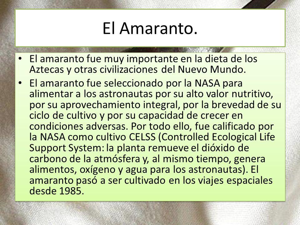 El Amaranto. El amaranto fue muy importante en la dieta de los Aztecas y otras civilizaciones del Nuevo Mundo.