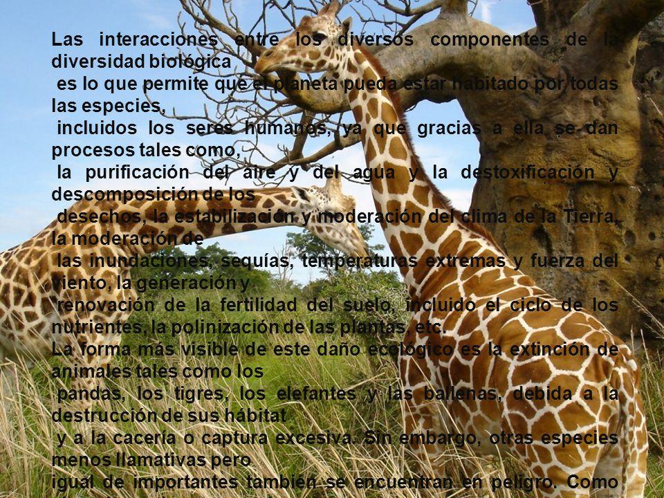 Las interacciones entre los diversos componentes de la diversidad biológica