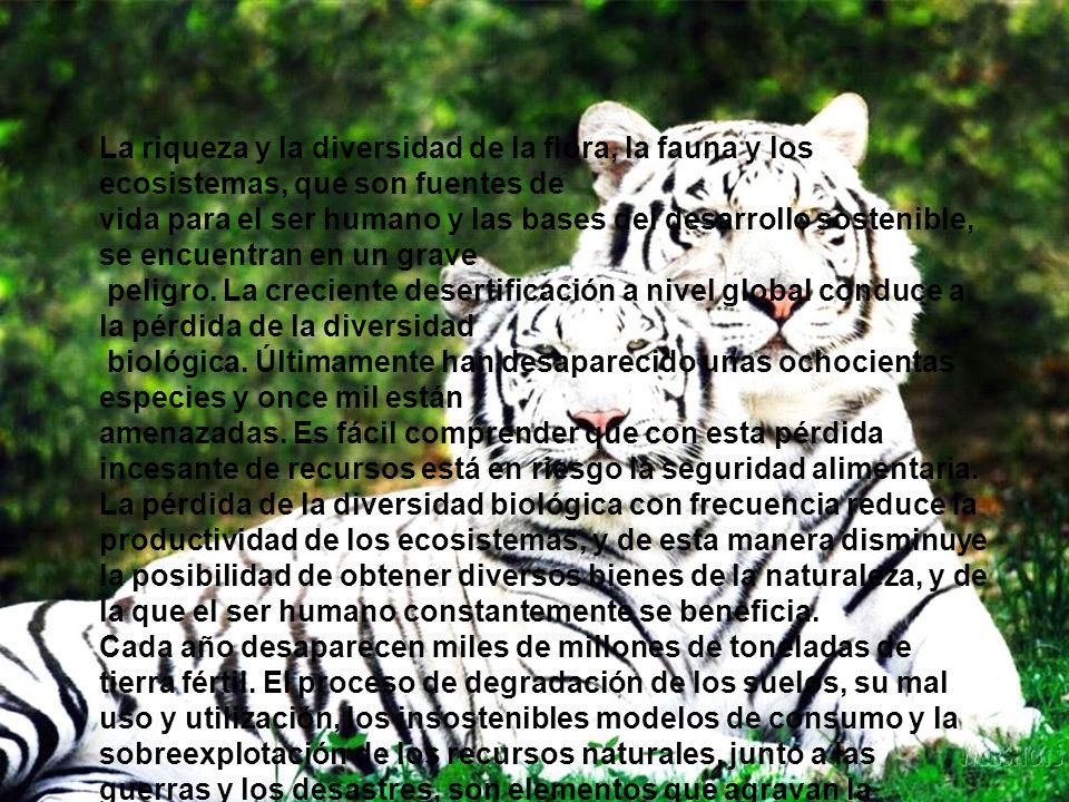 La riqueza y la diversidad de la flora, la fauna y los ecosistemas, que son fuentes de