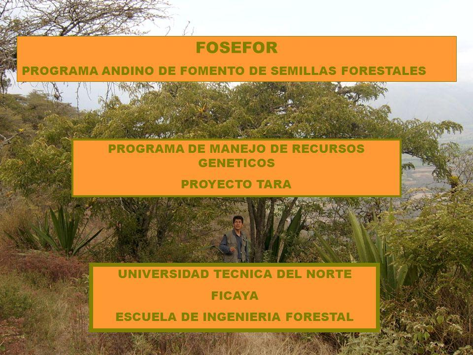 FOSEFOR PROGRAMA ANDINO DE FOMENTO DE SEMILLAS FORESTALES