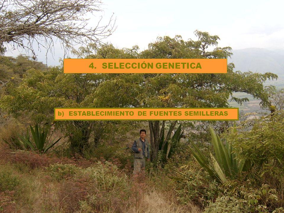 4. SELECCIÓN GENETICA b) ESTABLECIMIENTO DE FUENTES SEMILLERAS