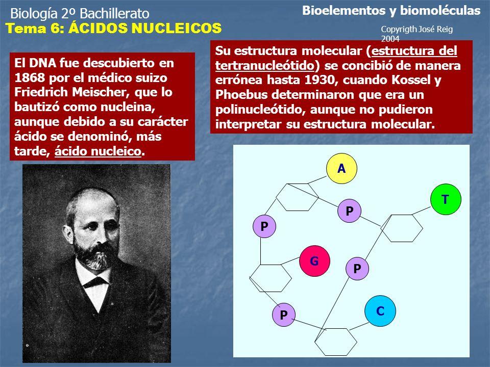 Biología 2º Bachillerato Tema 6: ÁCIDOS NUCLEICOS