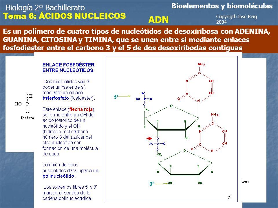 ADN Biología 2º Bachillerato Tema 6: ÁCIDOS NUCLEICOS