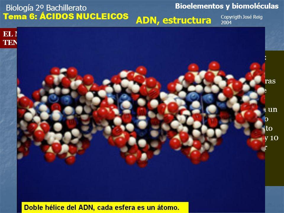 ADN, estructura Biología 2º Bachillerato Tema 6: ÁCIDOS NUCLEICOS