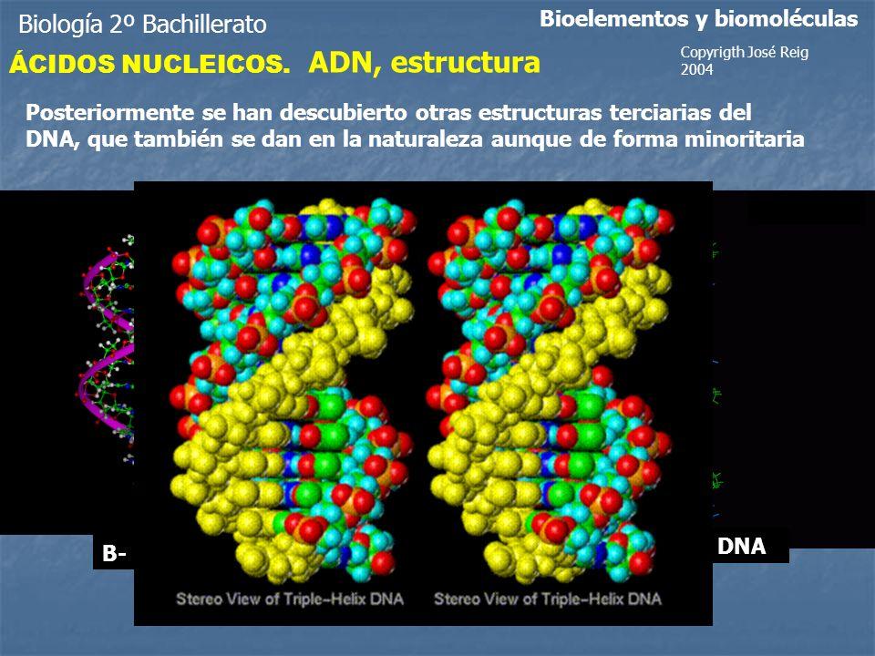 ADN, estructura Biología 2º Bachillerato ÁCIDOS NUCLEICOS.