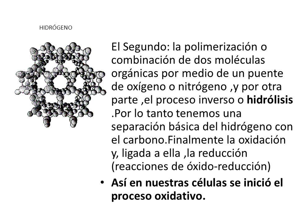 Así en nuestras células se inició el proceso oxidativo.