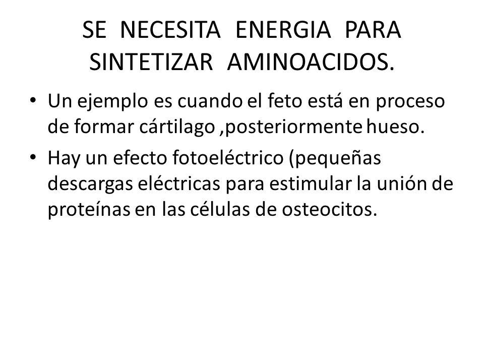SE NECESITA ENERGIA PARA SINTETIZAR AMINOACIDOS.