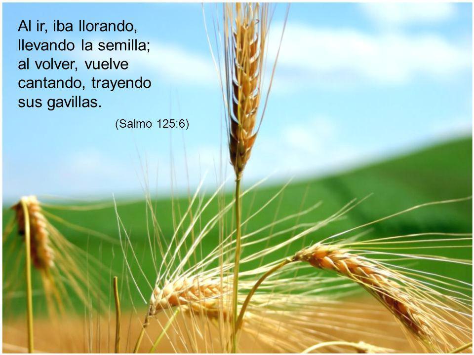 Al ir, iba llorando, llevando la semilla; al volver, vuelve cantando, trayendo