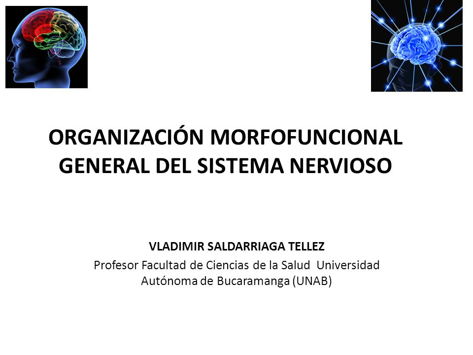 ORGANIZACIÓN MORFOFUNCIONAL GENERAL DEL SISTEMA NERVIOSO