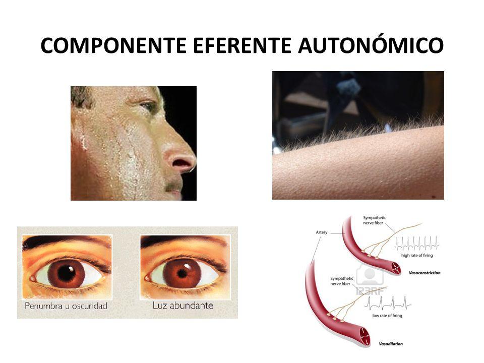 COMPONENTE EFERENTE AUTONÓMICO