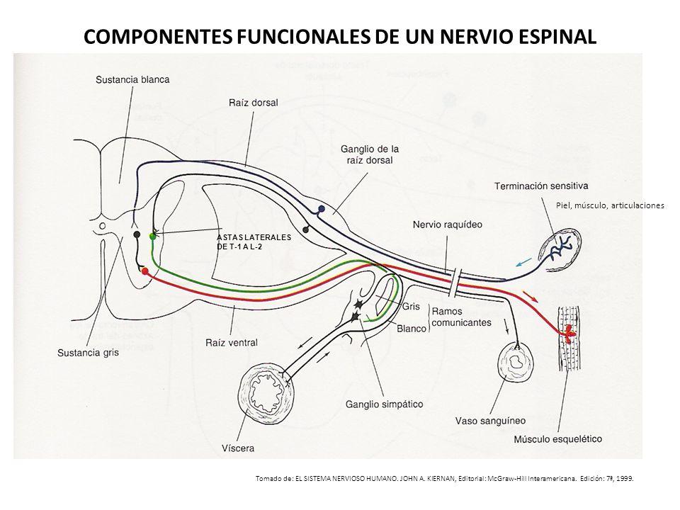 COMPONENTES FUNCIONALES DE UN NERVIO ESPINAL