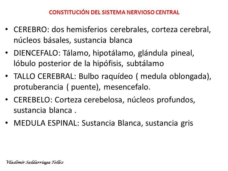 CONSTITUCIÓN DEL SISTEMA NERVIOSO CENTRAL