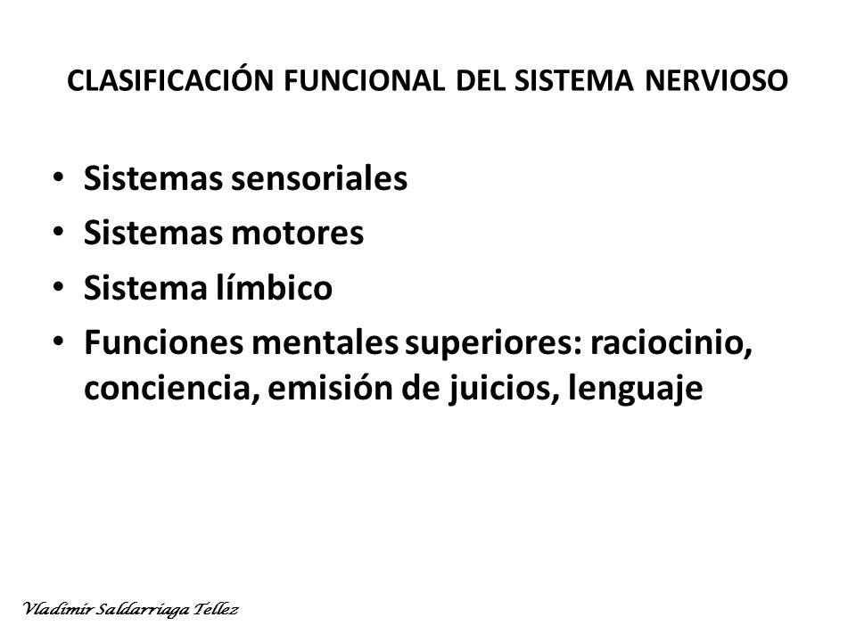 CLASIFICACIÓN FUNCIONAL DEL SISTEMA NERVIOSO