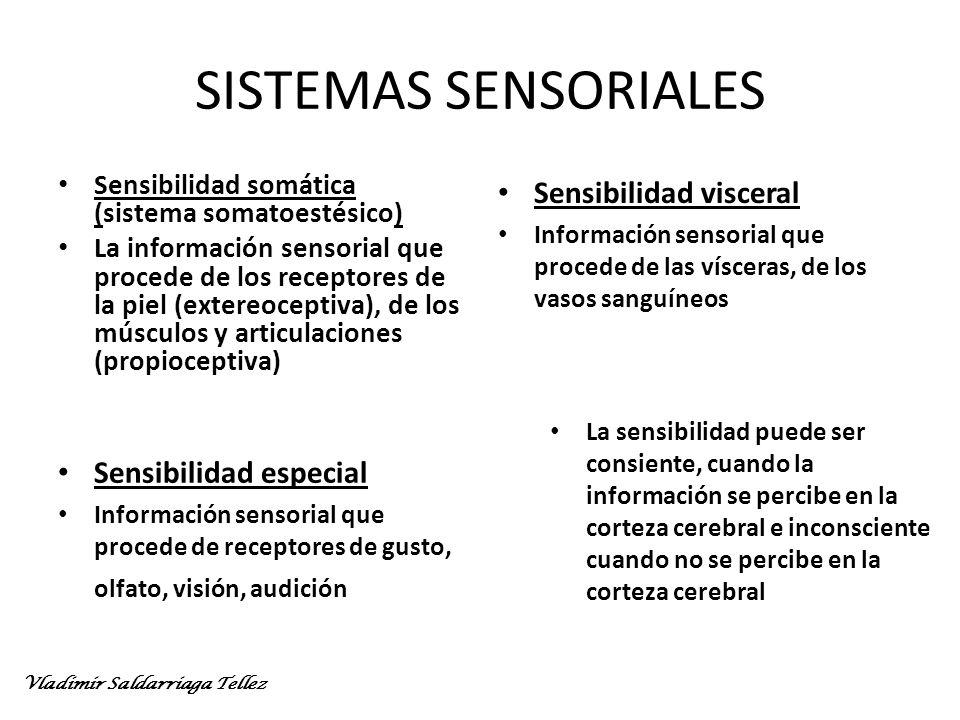 SISTEMAS SENSORIALES Sensibilidad visceral Sensibilidad especial