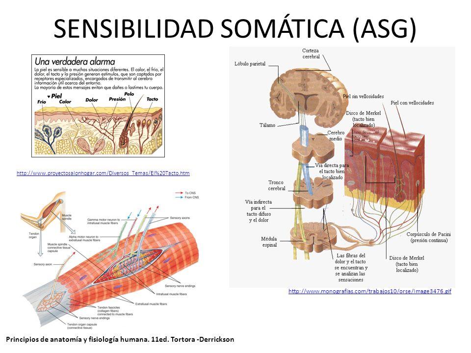 SENSIBILIDAD SOMÁTICA (ASG)