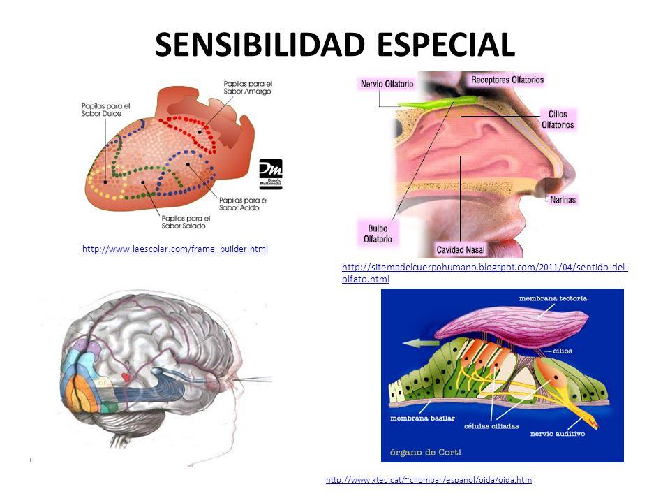 SENSIBILIDAD ESPECIAL