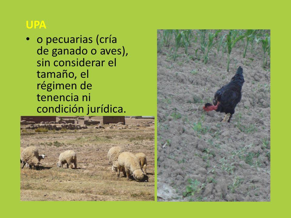 UPAo pecuarias (cría de ganado o aves), sin considerar el tamaño, el régimen de tenencia ni condición jurídica.