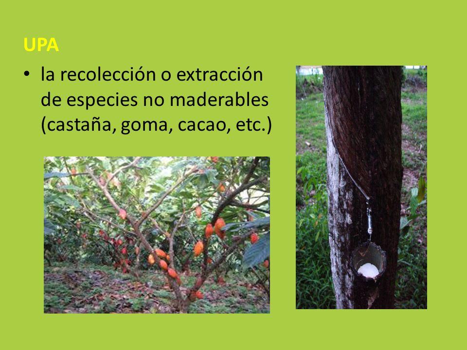 UPA la recolección o extracción de especies no maderables (castaña, goma, cacao, etc.)