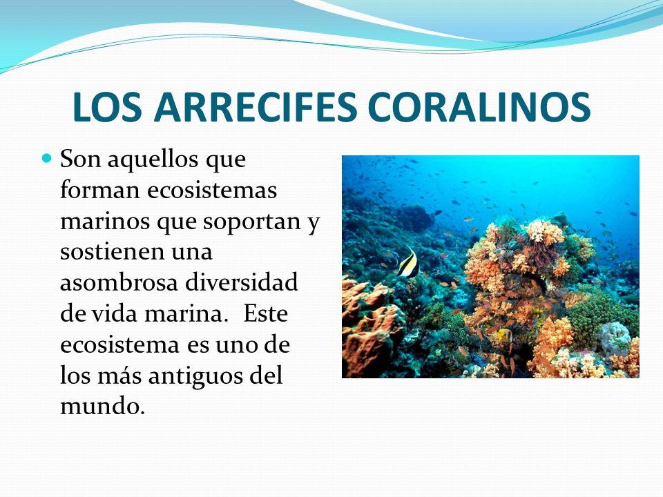 LOS ARRECIFES CORALINOS