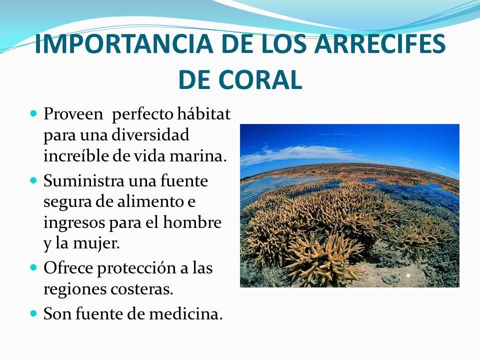 IMPORTANCIA DE LOS ARRECIFES DE CORAL