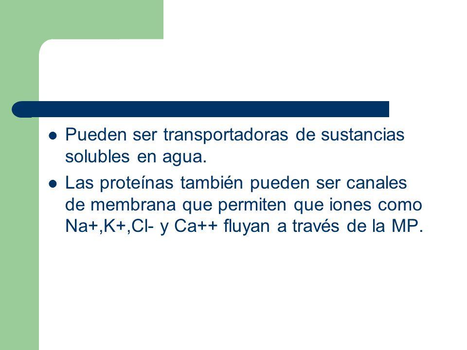 Pueden ser transportadoras de sustancias solubles en agua.