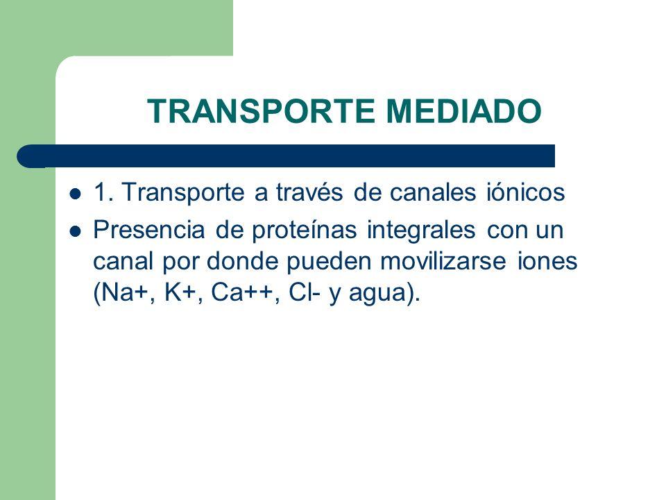 TRANSPORTE MEDIADO 1. Transporte a través de canales iónicos