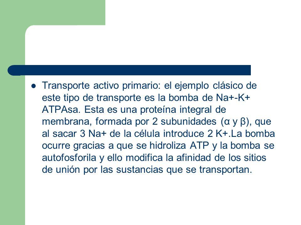 Transporte activo primario: el ejemplo clásico de este tipo de transporte es la bomba de Na+-K+ ATPAsa.