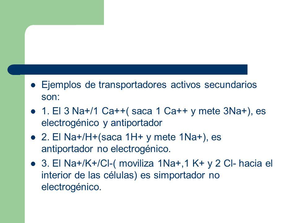 Ejemplos de transportadores activos secundarios son: