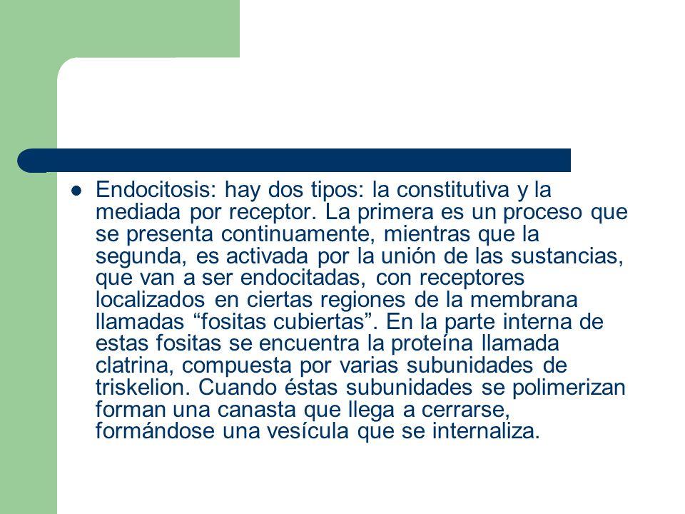 Endocitosis: hay dos tipos: la constitutiva y la mediada por receptor