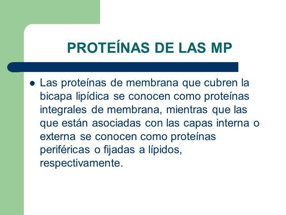 PROTEÍNAS DE LAS MP