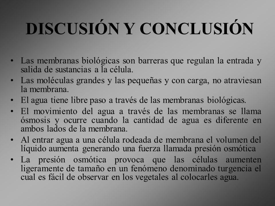 DISCUSIÓN Y CONCLUSIÓN