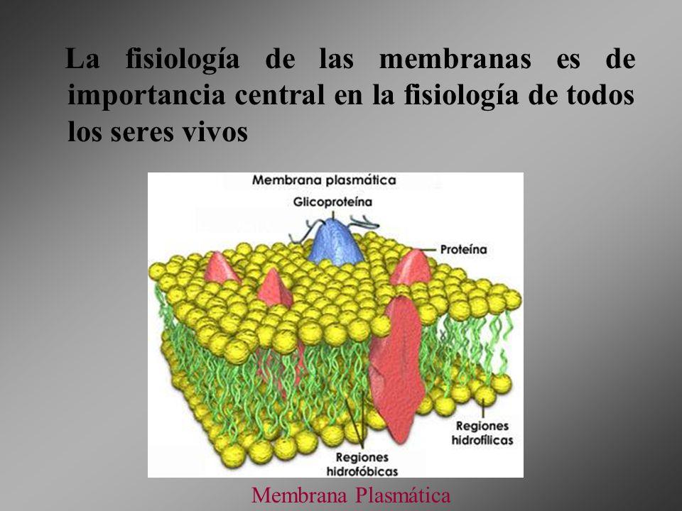 La fisiología de las membranas es de importancia central en la fisiología de todos los seres vivos