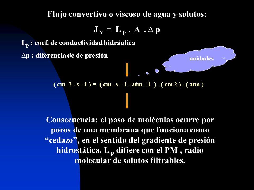 Flujo convectivo o viscoso de agua y solutos: