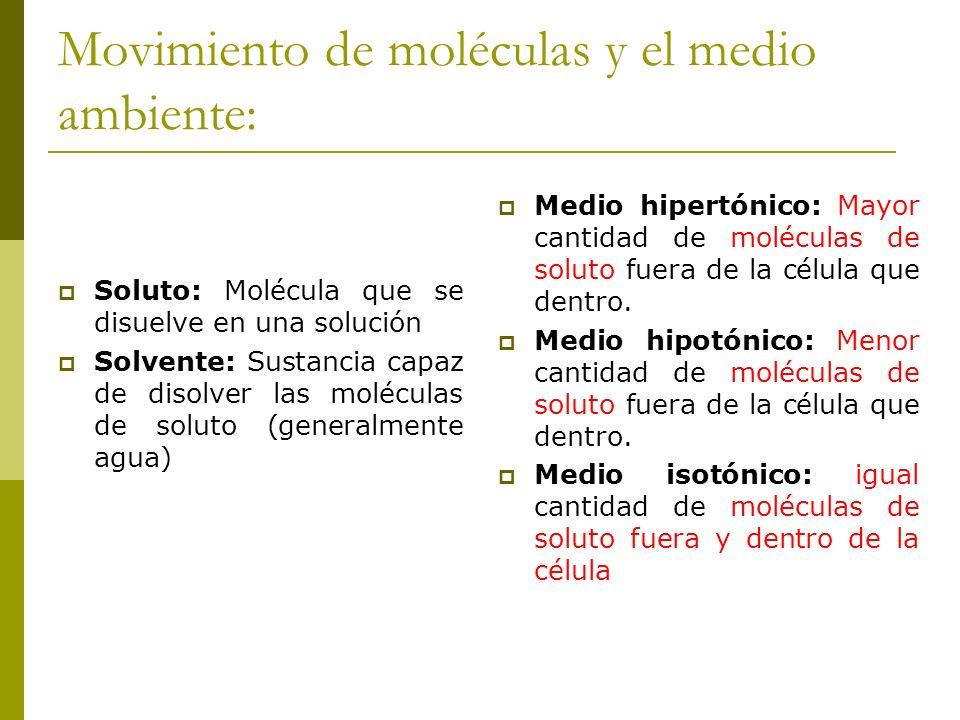 Movimiento de moléculas y el medio ambiente: