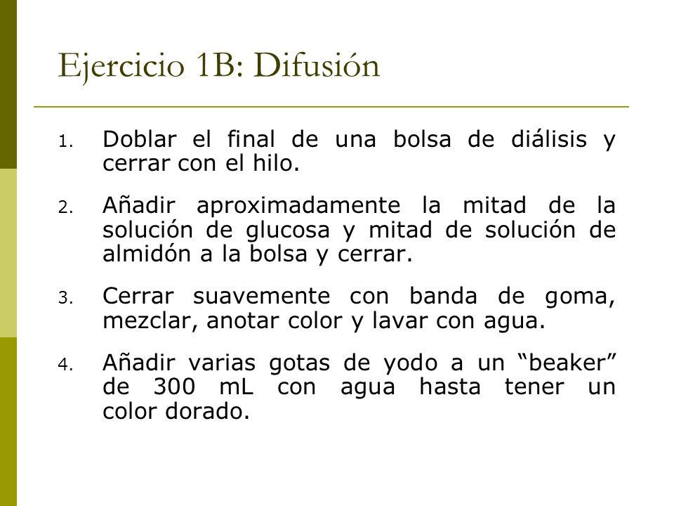 Ejercicio 1B: Difusión Doblar el final de una bolsa de diálisis y cerrar con el hilo.