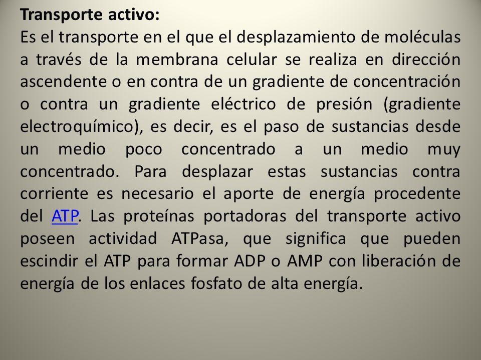 Transporte activo:
