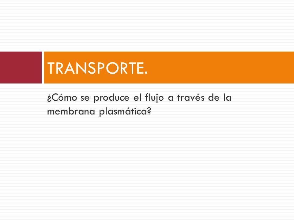 TRANSPORTE. ¿Cómo se produce el flujo a través de la membrana plasmática