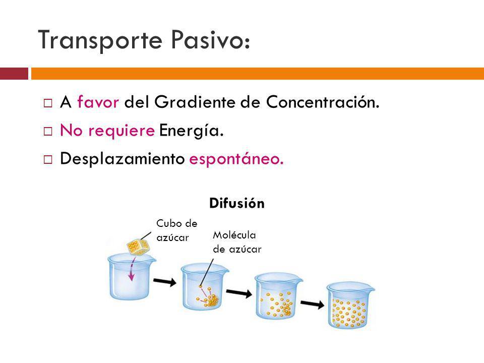 Transporte Pasivo: A favor del Gradiente de Concentración.