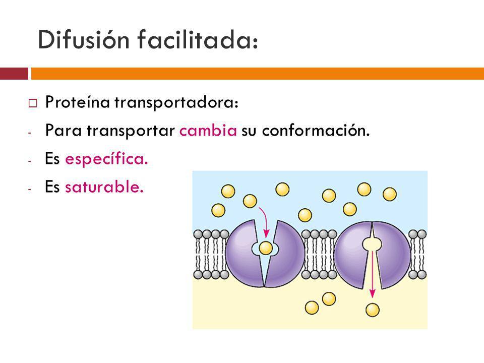 Difusión facilitada: Proteína transportadora:
