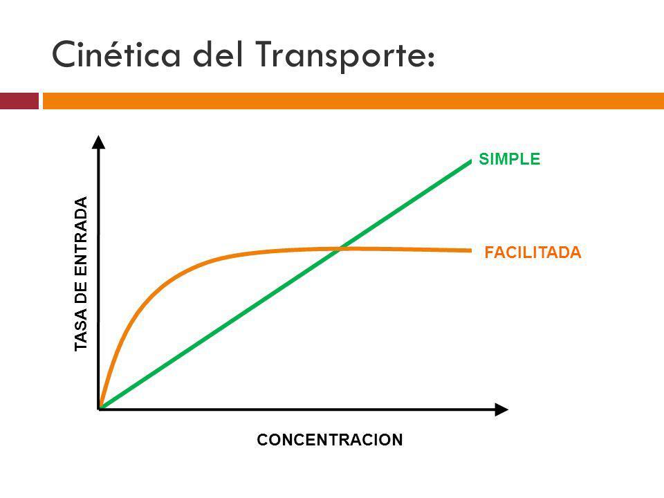 Cinética del Transporte: