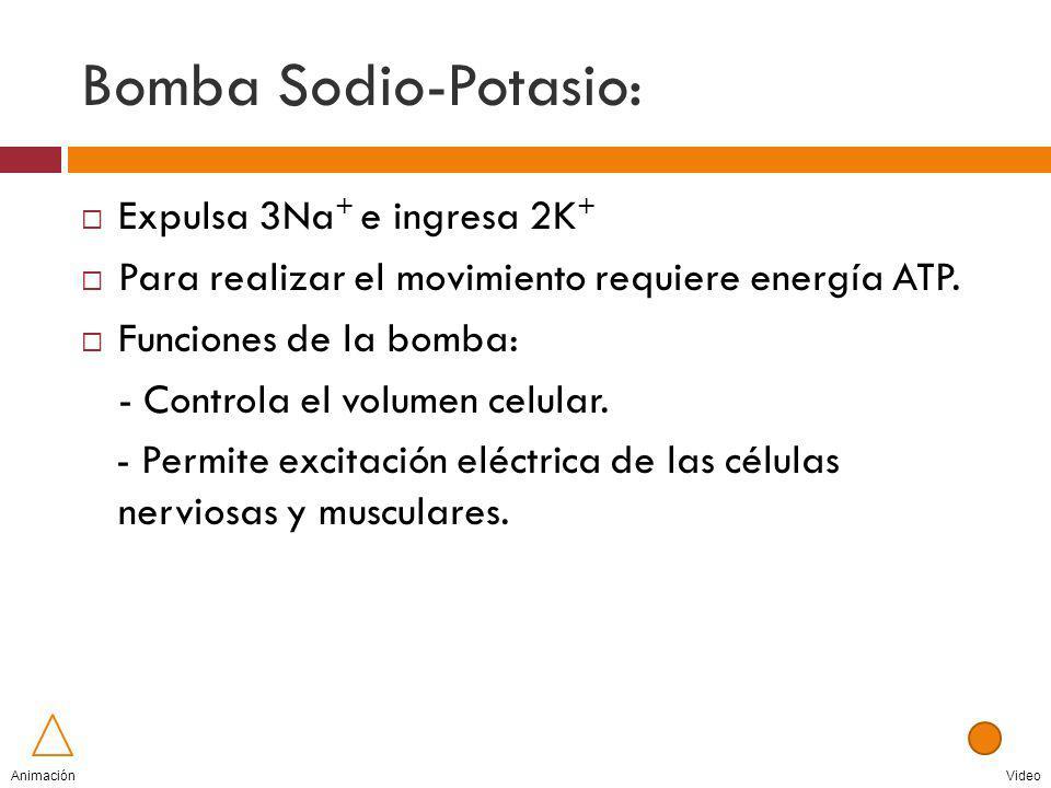 Bomba Sodio-Potasio: Expulsa 3Na+ e ingresa 2K+
