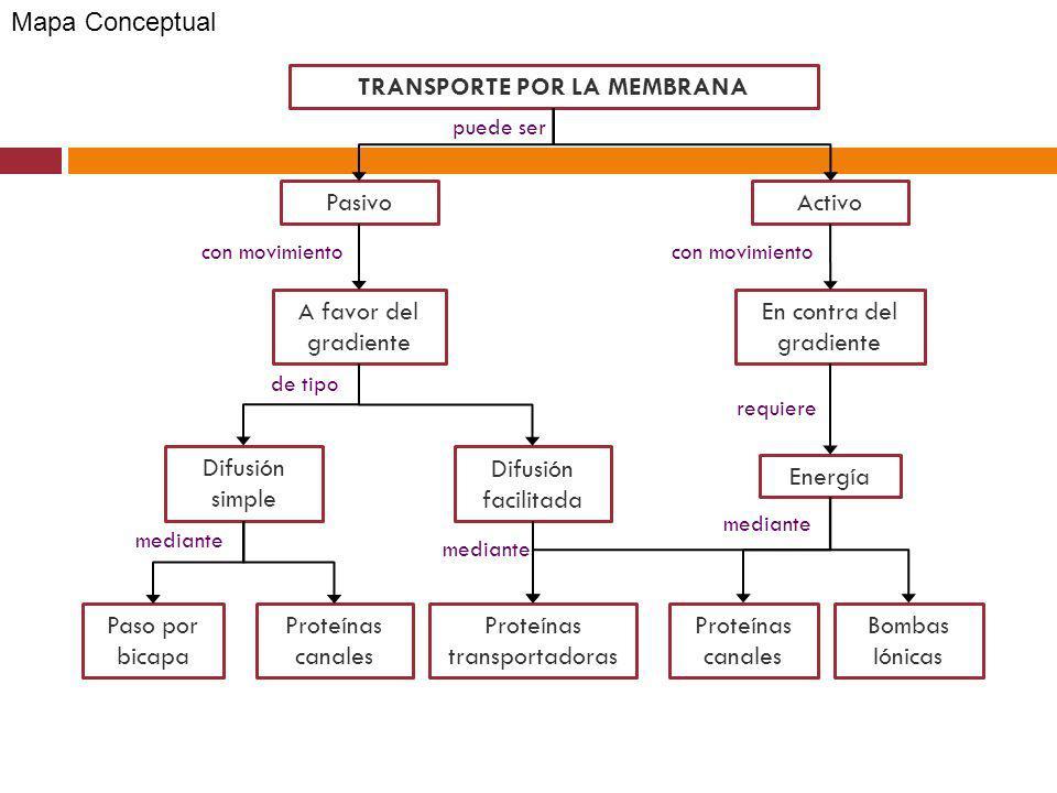 TRANSPORTE POR LA MEMBRANA