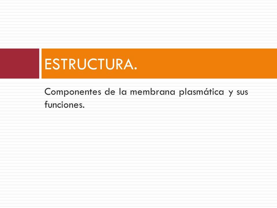 ESTRUCTURA. Componentes de la membrana plasmática y sus funciones.