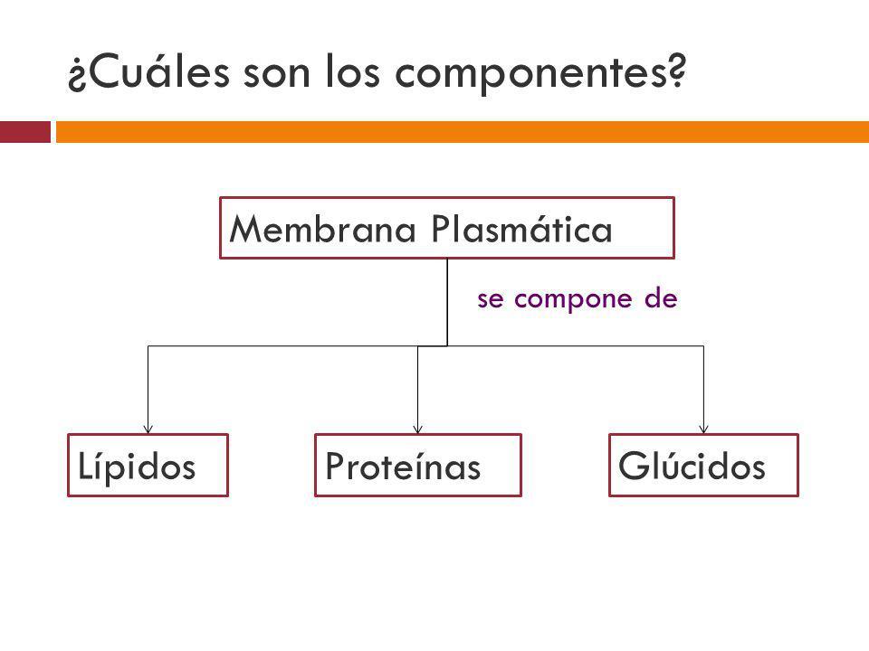 ¿Cuáles son los componentes