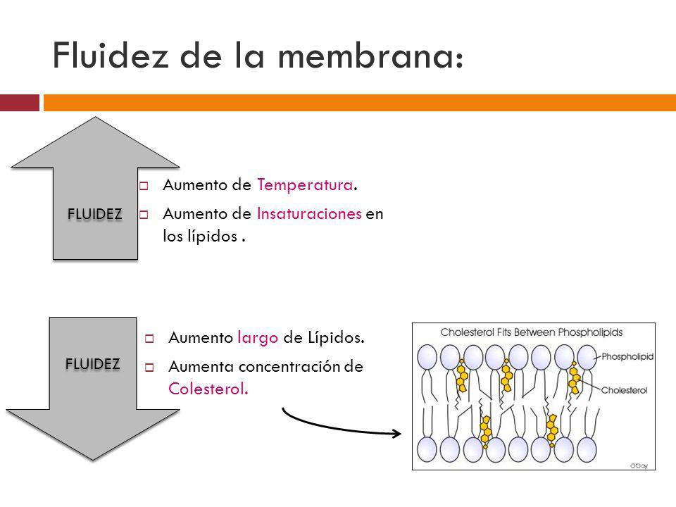 Fluidez de la membrana: