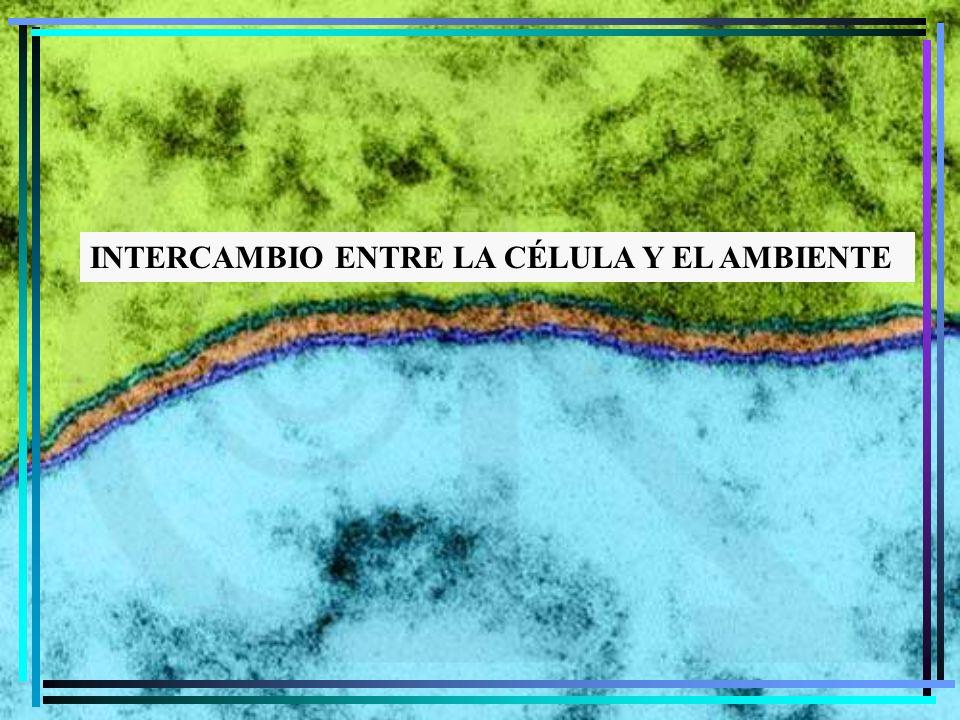 INTERCAMBIO ENTRE LA CÉLULA Y EL AMBIENTE