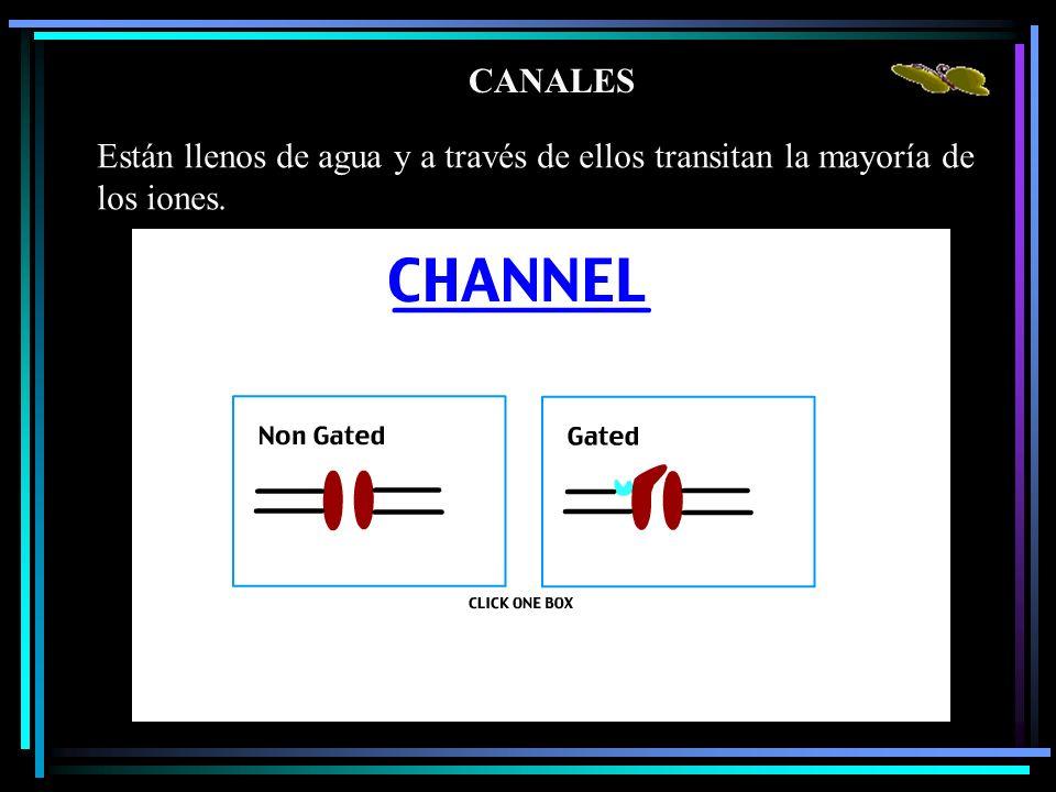 CANALES Están llenos de agua y a través de ellos transitan la mayoría de los iones.